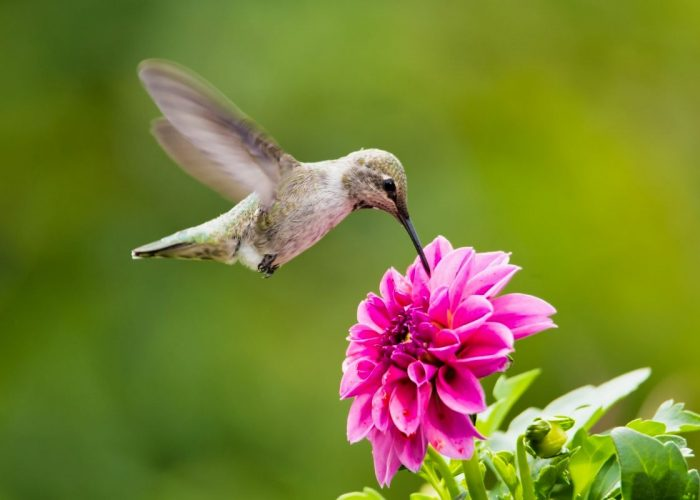 Bird Sits on the flower